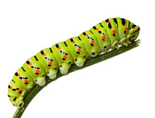 The Caterpillar Years